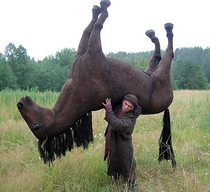 This is a horse on a shoulder Reddit beat it to death