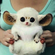 This is an Inari fox Or a Pokmon Im not sure