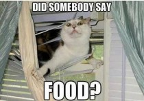 This is like my cat whenever she hears the can opener