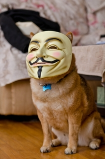 This is the hacker responsible for Reddit going offline on Saturday aka CATURDAY