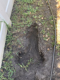 This is the hole our dogs dug in the backyard prouddogdad