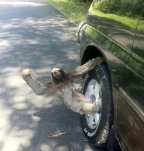 This is the reason why I love sloths