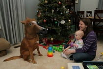 This is the year you should get your kids a horse for Christmas
