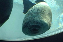 This is what happens when a seal runs into glass