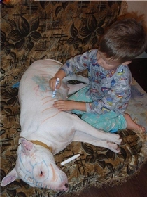 This is why you do not leave a bull terrier and a child unsupervised