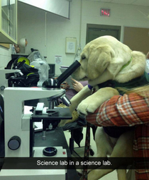 This lab belongs in the lab