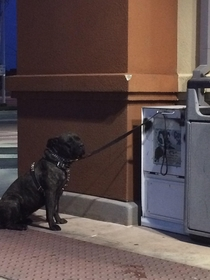 This man securely tied his dog outside Walgreens Surprisingly enough it worked