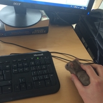 This new mouse isnt working