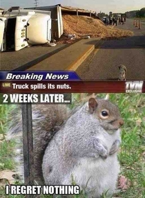 This Squirrel Has No Regrets