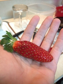 This strawberry thinks its a Jalapeo Good try Strawberry youre not fooling anyone