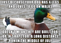 To the people who rarely exercise their dog and decide to bring them along for a K charity run