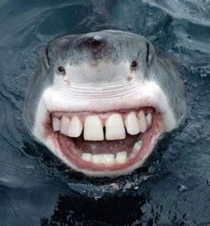 Told my friend I was scared of sharks he said google sharks with human teeth