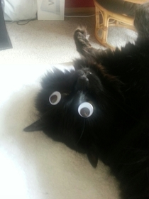 Took a few days of trying but my friend finally placed googly eyes on her sleeping cat and got a picture