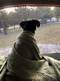 Took her camping for the first time she had been up for hours watching squirrels