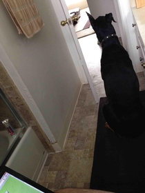 Took my parents Doberman home after Thanksgiving I now have security while pooping
