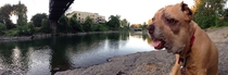 Tried to take a panoramic picture with my dog in it Instead I got Sloth from The Goonies enjoying a day at the river