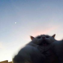 Tried to take a picture of my cat with the sky as the backdrop