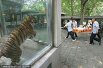 Trolling the Tiger exhibit