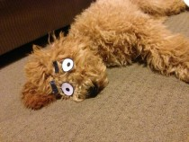 Turning your sleeping dog into a cartoon character is surprisingly easy