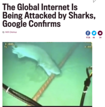 Turns out sharks arent modern creatures They despise technology and everything that came with it