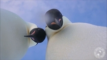 Two penguins wandered over to a camera left near their colony