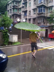 Umbrella swag