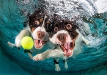 Underwater photo of two bois of the good trying to get to the ball