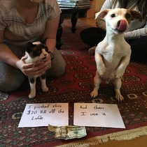 Unlikely partners pet shaming