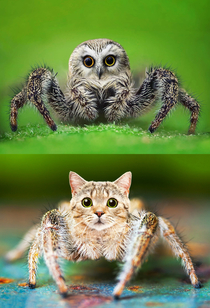 Using photoshop to make spiders less terrifying