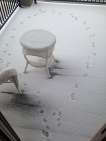 Usually my dog likes to chill on the porch This is the path he made this morning after he realized how cold and snowy it was