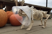 Veterinarians Halloween display is on point