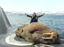 WALRUS ON A SUBMARINE