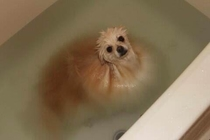 Warning Puppy is Water-Soluble