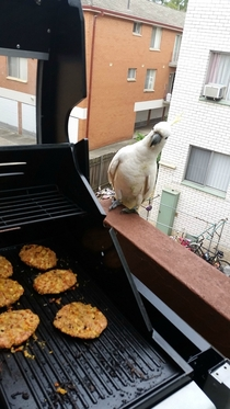 Was cooking on the barbie and this fella came along