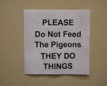 we cannot bear to tell you what horrors the pigeons have wrought