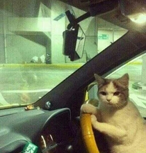 We dont need to ask for directions Helen