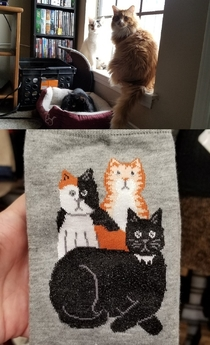 We found socks that matches all of our cats We couldnt pass them up