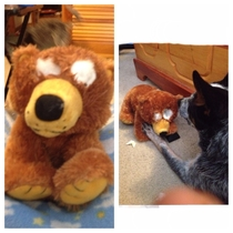 We gave my dog a teddy bear He ripped its eyes out and sat there staring at it