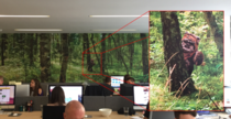 We have a wallpaper forest on one of the walls at work I wonder how long till the boss notices my upgrade