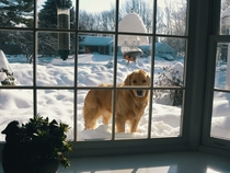 We have received so much snow recently that my dog can just look in the window when he wants to come in