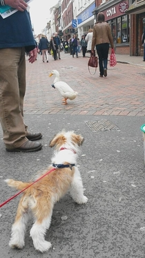 We met a duck wearing a bow tie He pecked Teddy on the nose and waddled off all nonchalant