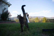 Wedding photo  outdoors  barn cat  awesome photobomb