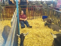 Went to the state fair and saw this lady napping with the goats