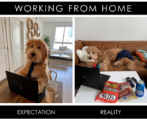 WFH - Expectation vs Reality IG thehungrydoodle