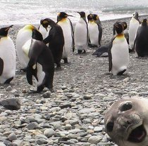 What a goofy seal