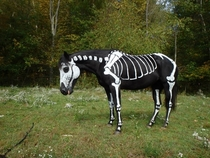 What about a painted horse