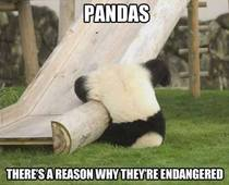 What is really endangering pandas