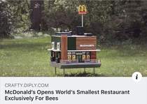 What is this A restaurant for ants