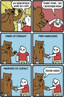 what to do when a bear attacks you
