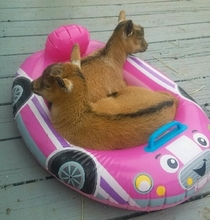 Whatever floats your goats